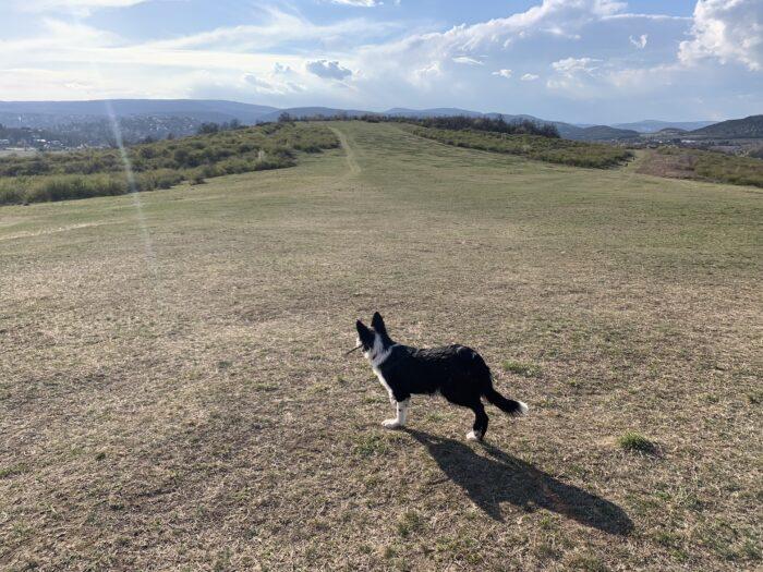 futás kutyával